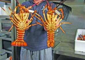 Fresh crays in the hands of a good chef.