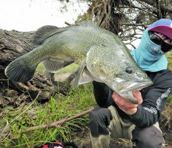 Local rivers have produced some trophy-size fish recently.