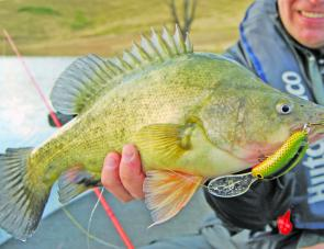 Golden perch will be the main target at this very popular fishing competition.