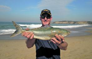 Glenn and his mates got stuck into some Jan Juc salmon recently.