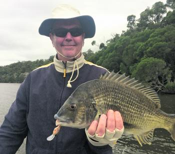 The sort of bream that can be targeted on surface lures around the Narooma region.