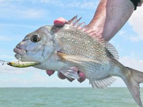 Choice of bait has been the key catching bream this season with the preferred presentations being mullet strips, green prawns and fresh yabbies.