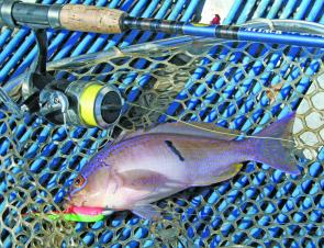 Goatfish can be a surprising catch during September.