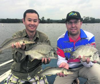 This is what can be expected in Tuross at present when casting surface presentations, quality bream and whiting. These fish were released after the photo.