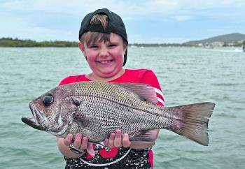 Zac Mitchard is pictured with a thumper pearl perch, boated on his 8th birthday. He caught this beauty on an offshore charter to North Reef on Trekka 2.