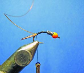 Attach the thread and wind to the bend of the hook and tie in the tail followed by the rib.
