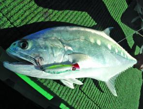 Using a Halco Twisty for queenfish, let the lure sink and then crank it back as fast as you can.