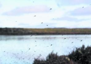 Midges create some intriguing fishing in spring's first month.