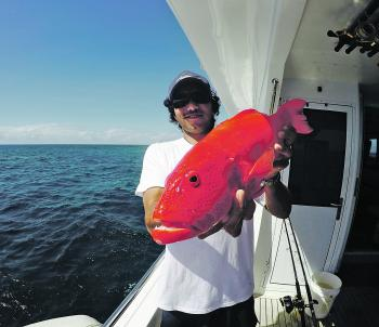 Jimmy Astill with a plump sized strawberry coral trout. It's about quality over quantity on the reef.