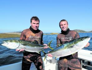Two typical Victorian yellowtail kingfish speared from the islands off Wilson Promontory weighing in at approximately 11-12 kg.