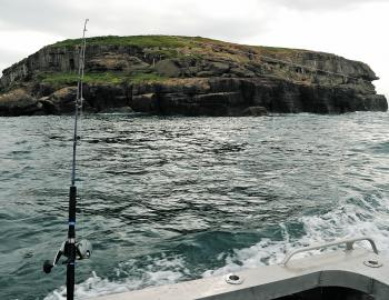 Bird Island is a major piece of structure that's likely to attract quality kingfish this month. The Bull at Norah Head and Lion Island at Broken Bay are similar in that decent kings can be caught by slow trolling livebaits around them.