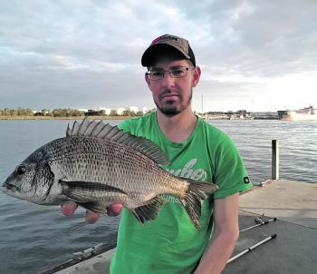 Scrubworms are always reliable on estuary bream in Melbourne!