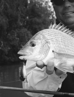 Locally-made Koolabung timber poppers get good results on fish like this solid bream.