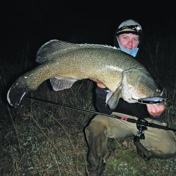 A Severn River cod caught off the surface.