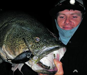 A Kingfisher surface lure was the undoing of this monster cod.