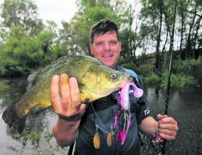 Brett Corker with a magnificent King River yellowbelly caught on a Bassman spinnerbait. Yellowbelly are rare in the King River and this fish gave us a real surprise.