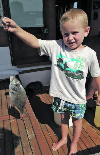 Even the kids have been able to get in on the action, with the estuaries really firing-up and this month the bream are feeding close to the mouths of harbours, rivers and lakes, getting ready for their spawning run up the coast. Blake Johnson is only a li