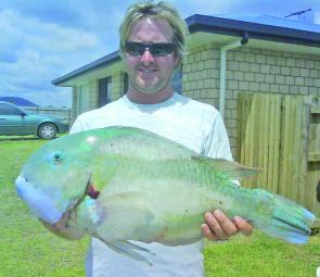 Blueys will move right into very shallow water on the making tide, and fresh large prawns or small crabs are top baits for them.
