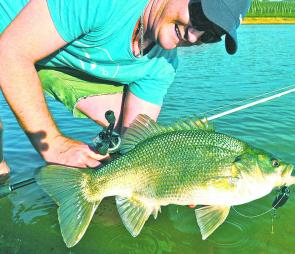 Good mate Adam Royter was searching for a golden in a lake when around 3.6kg of Aussie bass slammed his No. 2 pepe coloured StumpJumper. Awesome!