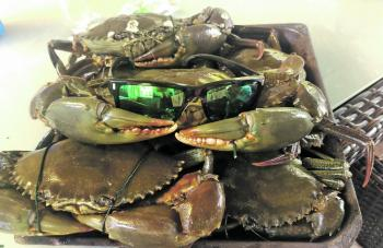 Plenty of crabs around like these cool cats.