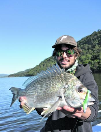 Some impressive bream will filter back into our estuaries this month, fish small soft plastic lures and blades or lightly weighted baits for best results.