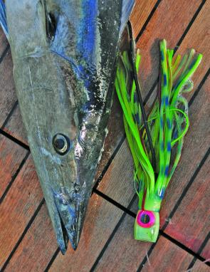 Wahoo can do some serious damage to your billfish lures.