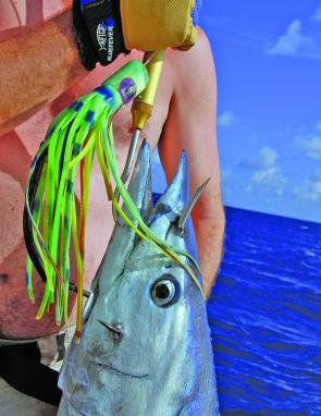 With an aggressive strike, it's not uncommon to have wahoo hooked outside the mouth.