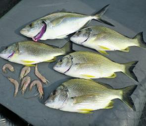Bream have slowed up across Botany Bay but are still worth targeting until the water temp drops.