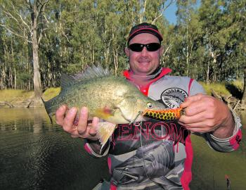 Golden perch are still a regular catch in the Murray River around Robinvale.